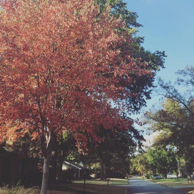Fall 2015 043